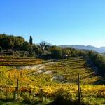 Valpolicella Tour