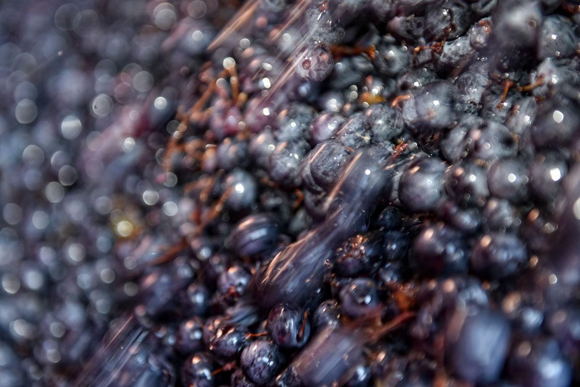valpolicella wine region