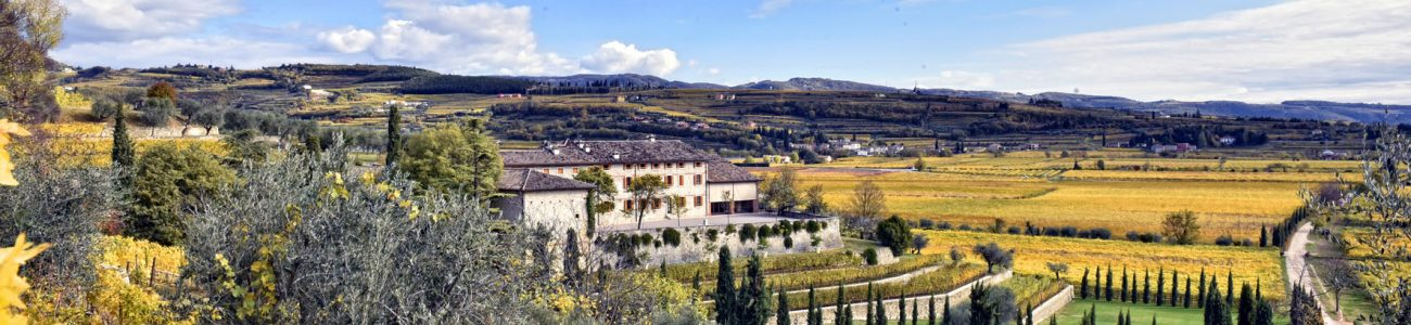 Valpolicella Wine Tour: 3 Wineries & Lunch