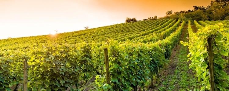Prosecco & Amarone Wine