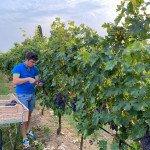Amarone Valpolicella wine tour